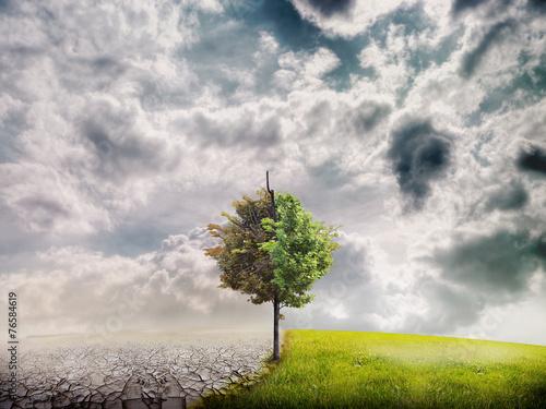 Poster Droogte ecology landscape