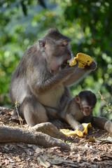 Indonesia, bali: foresta delle scimmie