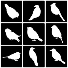 Icons of cute  birds
