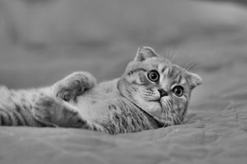 Кот лежащий на спине