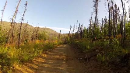 Alaska Forrest Trail Trees