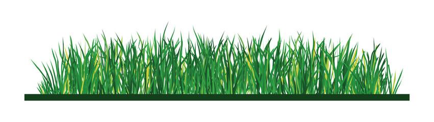 Green grass on white background, illustration