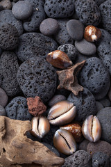 Shells and volcanic stones