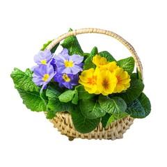 Blumenkorb mit Primeln