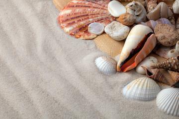 Beach stones and shells