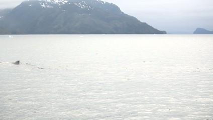 Water Boat Alaska Whale