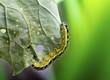 bruco di farfalla cavolaia