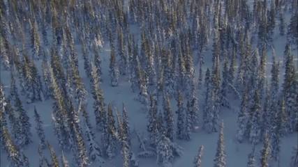 snow forest trees sunrise sunset
