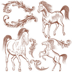 Collection of vector hand drawn horses and flourishes for design