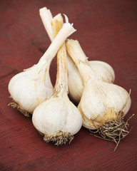 garlic bunches