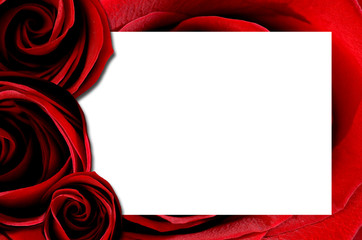 frame with rose for Valentine's day