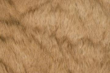 カンガルーの皮