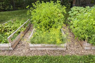 Vegetable garden in raised boxes