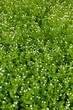 Beautiful spring grass outdoors