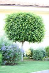 Beautiful tree and bushes at park