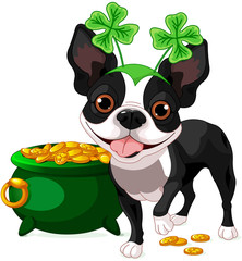 Boston Terrier celebrates Saint Patrick Day