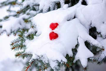 Fir tree branch covered with snow and hearts, closeup view