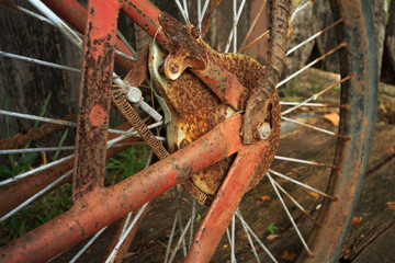 rusty old bicycle wheel