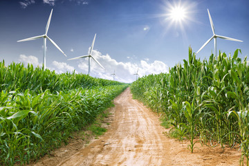 wind energy plant and corn field