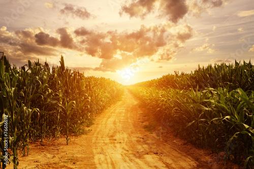 Leinwanddruck Bild skyline and corn field