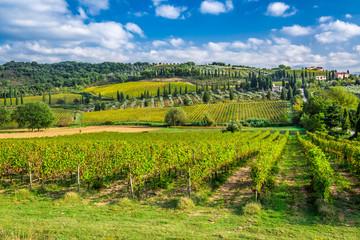Vineyard near Montalcino in Tuscany