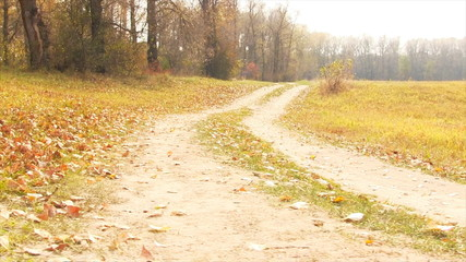 Autumn rural road. Dolly slider shot. Full HD.