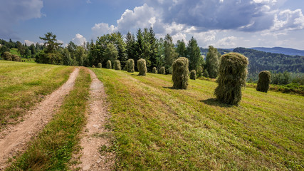 Haymaking in the mountains