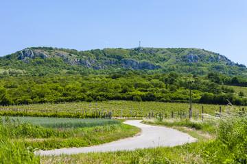 vineyard and Palava, Czech Republic