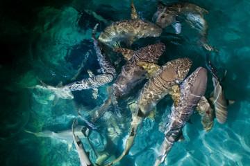 Night shark feeding - many sharks