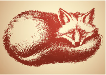 Sleepy fox vector sketch