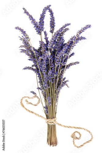 Staande foto Lavendel Lavender Herb Flowers