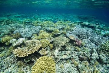 サンゴ礁のお花畑