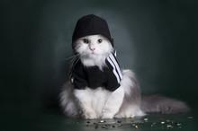 "Постер, картина, фотообои ""dangerous cat rough jacket with a hood on a dark background"""