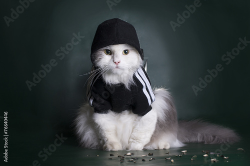 dangerous cat rough jacket with a hood on a dark background - 76640446