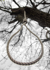 noose hanging in a tree