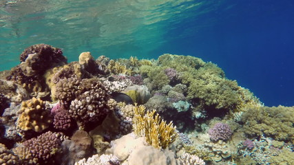 Coral and fish in the Red Sea - Egypt