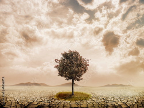 Lonely tree in the desert - 76641655