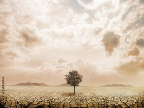 Foto op Canvas Droogte Lonely tree in the desert