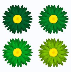 Set de flores en tonos verdes. Margaritas de colores. Primavera