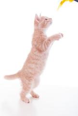 Katzenjunges beim Spielen