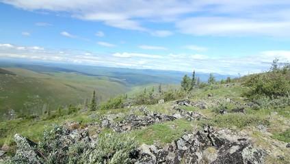 Alaska Hilltops Trees