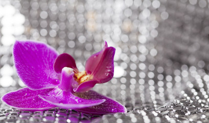 Silver background with purple orchid and water drops