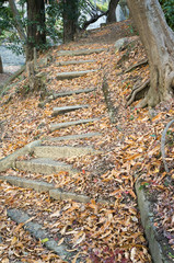 Beautiful Stairs of fallen golden maple leaves.