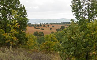 Paisaje de Campos de Cultivo y Bosque de Robles