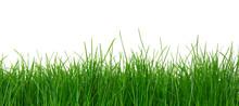 "Постер, картина, фотообои ""Green grass on white background"""