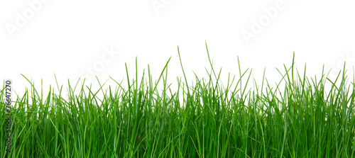 Staande foto Weide, Moeras Green grass on white background