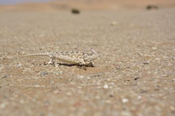 Namibwüste nahe Swakopmund, Namibia, Afrika