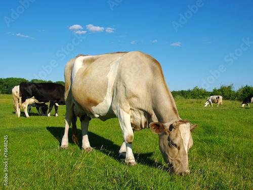 Aluminium Cow