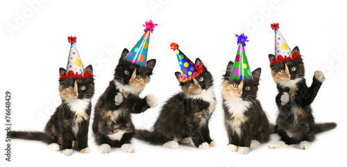 Foto op Plexiglas Kat 5 Kittens on a White Background With Birthday Hats