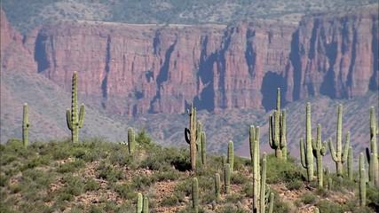 Desert Cactus Mountains